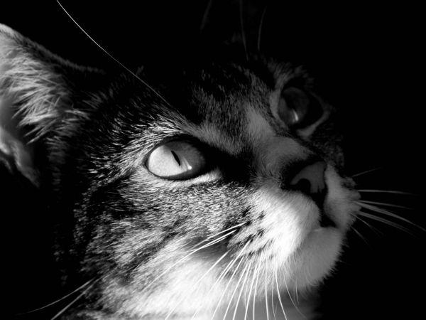 Fond d'écran n° 408 >>> Chat noir et blanc