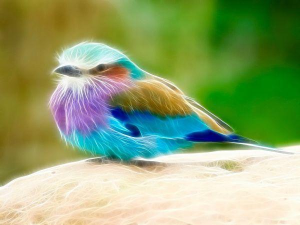 dans fond ecran animal fonds-ecran-oiseau-fractal-479