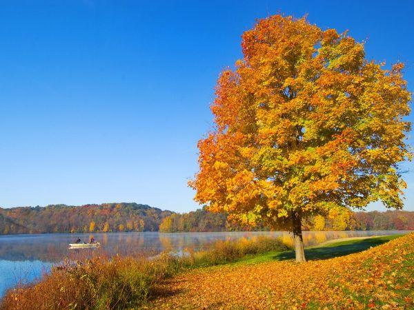 paysage d 39 automne image n 128 paysages vari s. Black Bedroom Furniture Sets. Home Design Ideas
